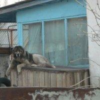 кавказец :: tgtyjdrf