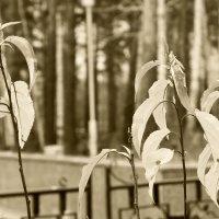 Последние листья... :: Стил Франс