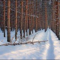 Тропинка в зимнем лесу :: Николай Белавин