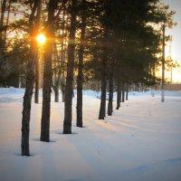 Зимнее , солнечное . :: Мила Бовкун