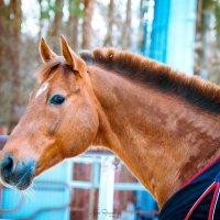 Для конника лошадь - больше, чем просто животное :: Анна Раневская