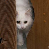 Страшнее кошки зверя нет :: Антон Банков
