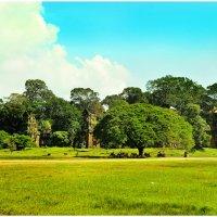 Чудное дерево. Камбоджа :: Ольга Степанова