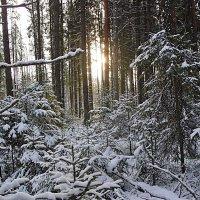 Полдень в зимнем лесу! :: Андрей Синицын