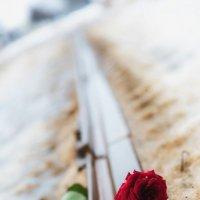 Печальная роза :: Serega Alukard X2