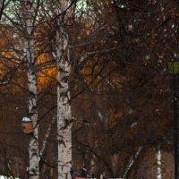 скамейки в парке :: Валерий Валвиз