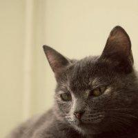 Греющийся кот :: Наталья Ремизова