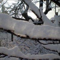 Снег :: Татьяна Пальчикова