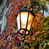 Осенний фонарик :: Ольга
