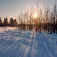 Утренние тени :: Валерий Талашов