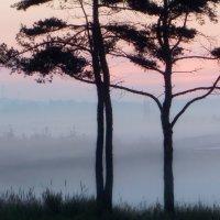 В тумане утреннем :: Юрий Цыплятников