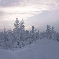 Зимний таёжный вечер в канун Крещения... :: Николай