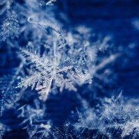 мир снежинок :: Anastasiya Lychagina