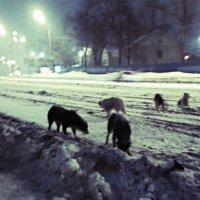 у бродячих собак есть, то чего нет у породистых-свобода :: Ксения -