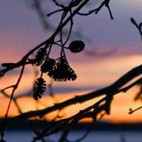 До весны спящие сережки :: Светлана Игнатьева