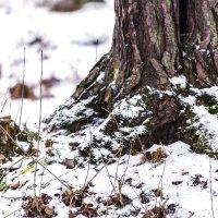 Снег и лес :: Ольга Рощектаева