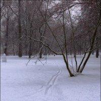 И где лыжник? :: Сергей Еремин