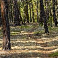 Тропинка в лесу :: Михаил Потапов