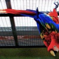 Трюк попугая :: Nikolay Monahov