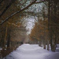 зимняя алея парка :: Юрий Михайличенко
