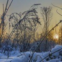 Лес кустов с игрою света :: sorovey Sol