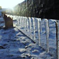 Зима :: Полина