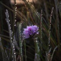 Вечером в траве :: Татьяна Кадочникова