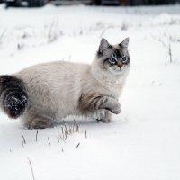 Первый в жизни снег :: Алёна Гершфельд