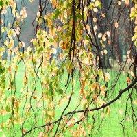 Осень :: Михаил Букреев (NYIP)