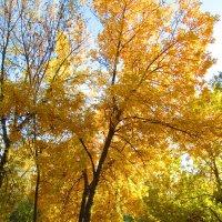 Дерево-солнце :: Анастасия