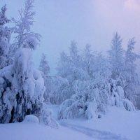 Таёжный пейзаж :: Николай