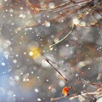 Вчера был дождь, сегодня снег... :: TATYANA PODYMA