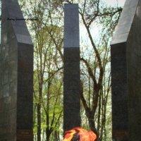9 мая :: Андрей Герасимов