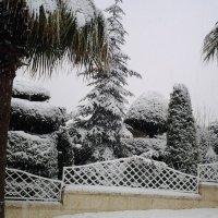 Зимний сад. :: Жанна Викторовна
