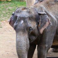 Слоненок :: Александр