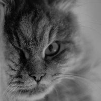 О чём думают коты? :: Anton Pronoza