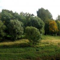 Деревья кудрявые :: Елена Семигина