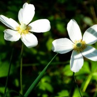 Цветок 2 :: Сергей Бажов