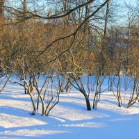 В зимнем парке... :: Tatiana Markova