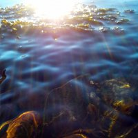 Под водой :: оксана