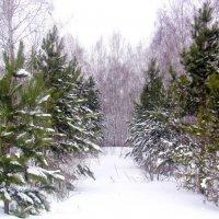 А за городом зима, зима, зима! :: Татьяна Лютаева