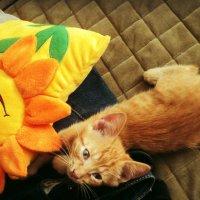 Котёнок мягоньким бочком к вам ласково прижмётся. :: Ольга Кривых