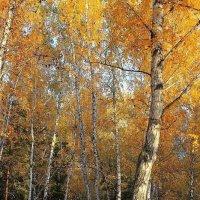 Светлая осень... :: Галина Стрельченя