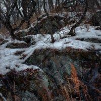 Каменные джунгли :: Сергей