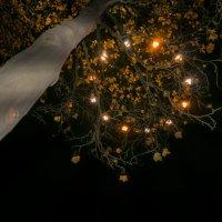 Осень свила гнездо на ветвях :: Татьяна Кадочникова