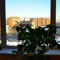 А из нашего окна... :: Владимир Болдырев