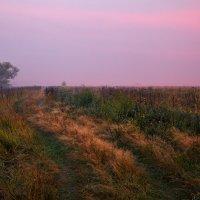 Разноцветье августа... :: Roman Lunin
