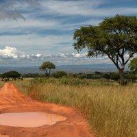 Африканский пейзаж :: Евгений Печенин