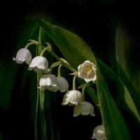 цветок серебристый :: gribushko грибушко Николай