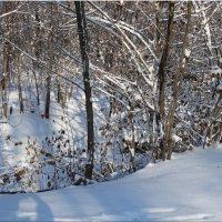 Ясный зимний день...3 :: Тамара (st.tamara)